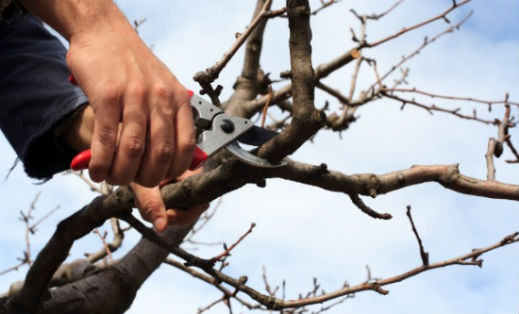 Spring Home Maintenance: Trim Overgrown Trees and Shrubs