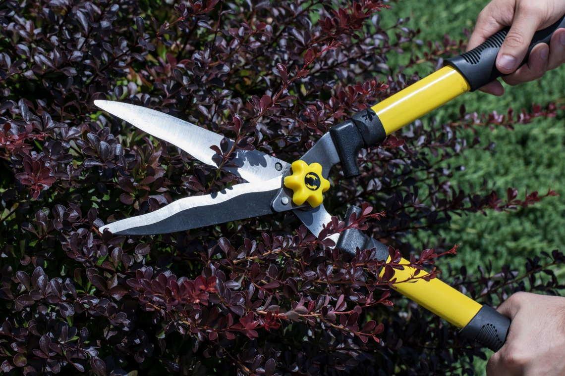 Hedge shears keep landscaping, bushes and trees properly trimmed to boost your curb appeal.