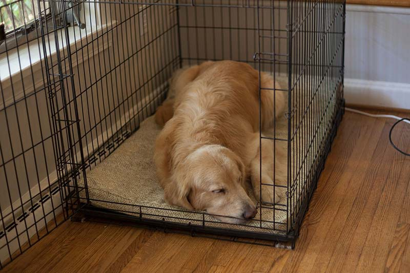 Measure your dog while they're resting to get a good idea of how big of a bed you need.