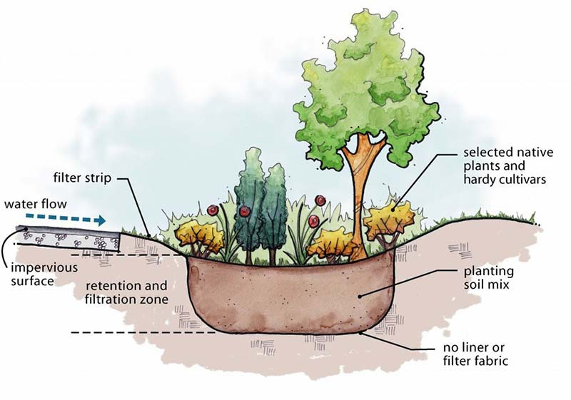 Rain Garden Diagram | GreyDock Blog