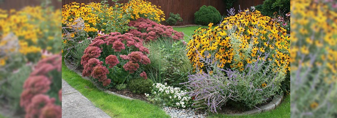 How to Prevent Water Pollution with a Rain Garden | GreyDock Blog
