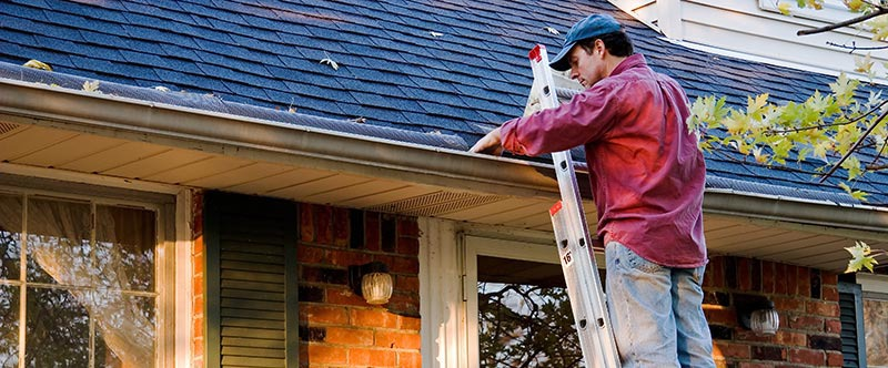 DIY Pest Control: Clean gutters and remove standing water