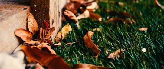 Autumn Yard Upkeep: How to Winterize Your Lawn & Garden | GreyDock Blog