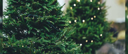 How to Properly Recycle a Christmas Tree | GreyDock Blog