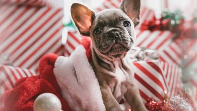 What Gift Should I Get My Dog for Christmas? | GreyDock Blog