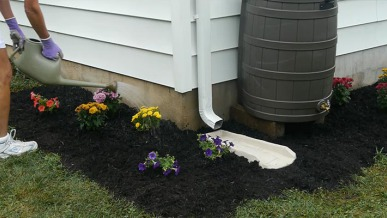 Rain Barrels 101: How to Collect Rainwater