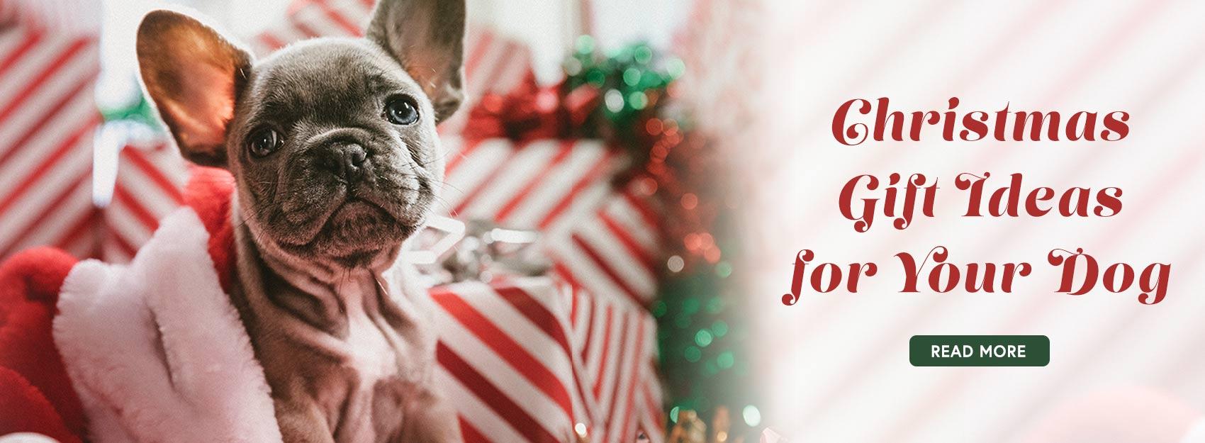 What Gift Should I Get My Dog for Christmas? | GreyDock Blog