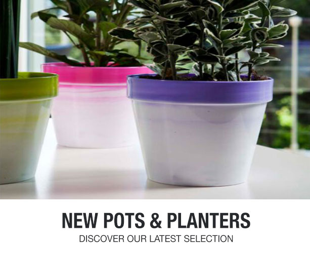 Take Spring to the next level with flower and gardening products.